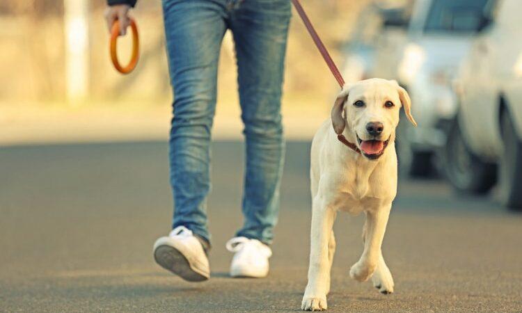 """Aplicativo cuidador de cachorro: como funcionam os """"dog walkers"""""""